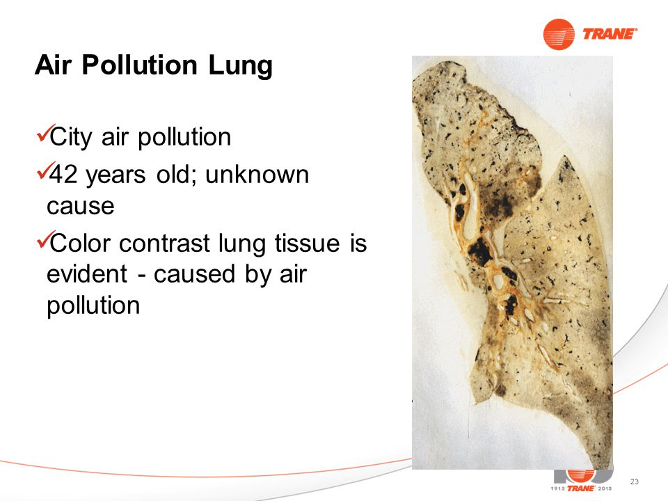 23 Air Pollution Lung City air pollution 42 years old; unknown cause Color contrast lung tissue is evident - caused by air pollution