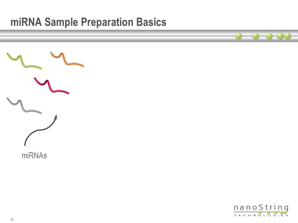 miRNA Sample Preparation Basics 36 miRNAs