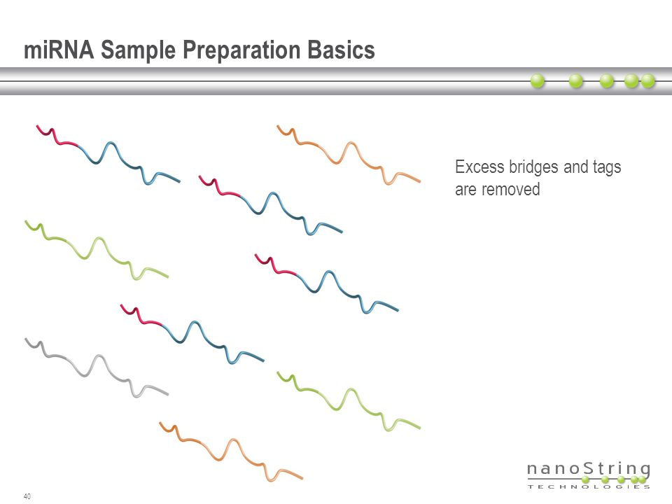 miRNA Sample Preparation Basics Excess bridges and tags are removed 40