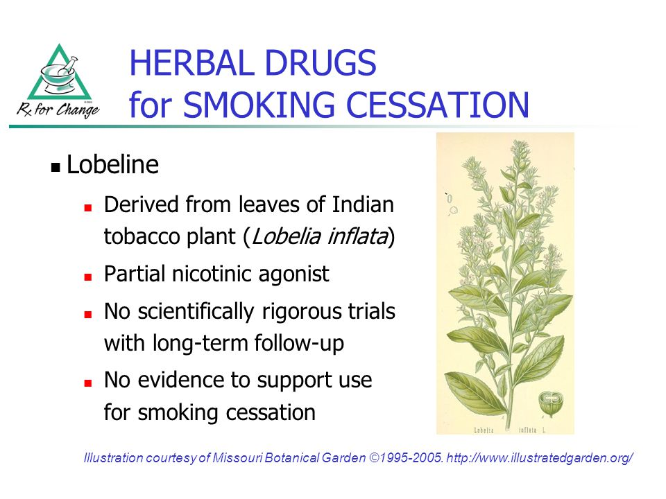 HERBAL DRUGS for SMOKING CESSATION Lobeline Derived from leaves of Indian tobacco plant (Lobelia inflata) Partial nicotinic agonist No scientifically