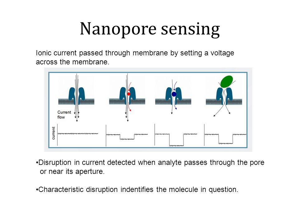 Nanopore DNA sequencing DNA polymer or individual nucleotides pass through the nanopore.