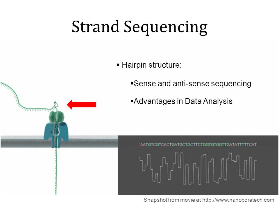 Exonuclease Sequencing Snapshot from movie at http://www.nanoporetech.com