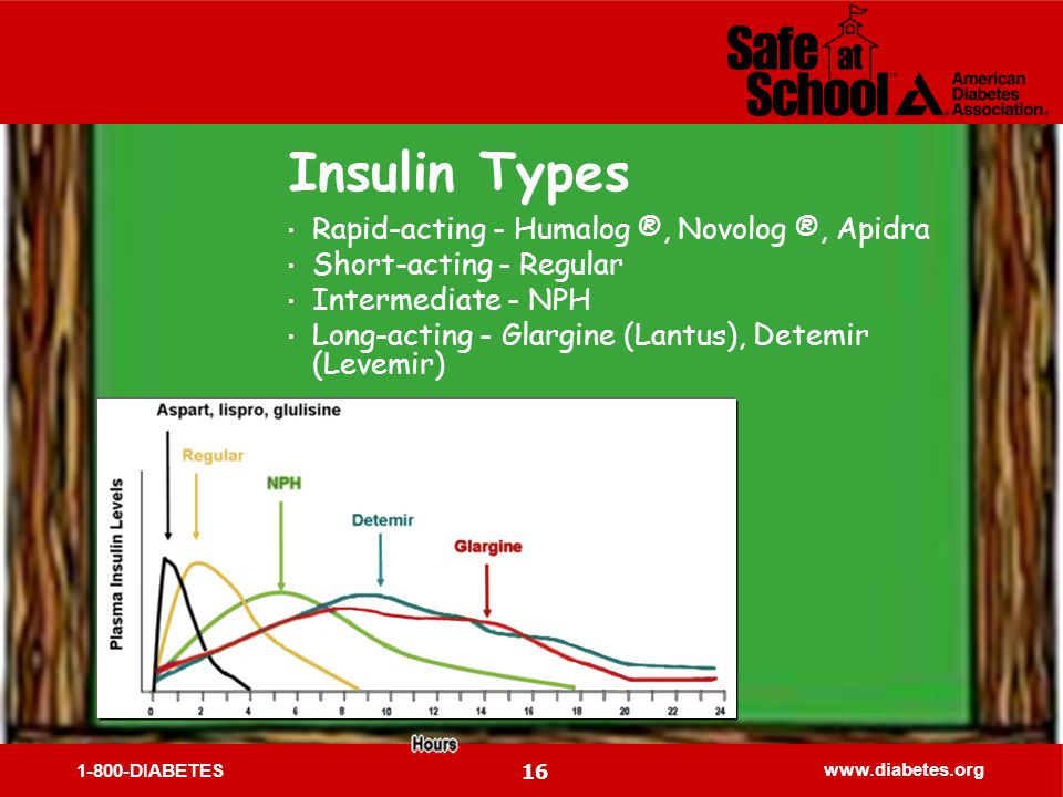 1-800-DIABETES www.diabetes.org 16 Insulin Types Rapid-acting - Humalog ®, Novolog ®, Apidra Short-acting - Regular Intermediate - NPH Long-acting - Glargine (Lantus), Detemir (Levemir)