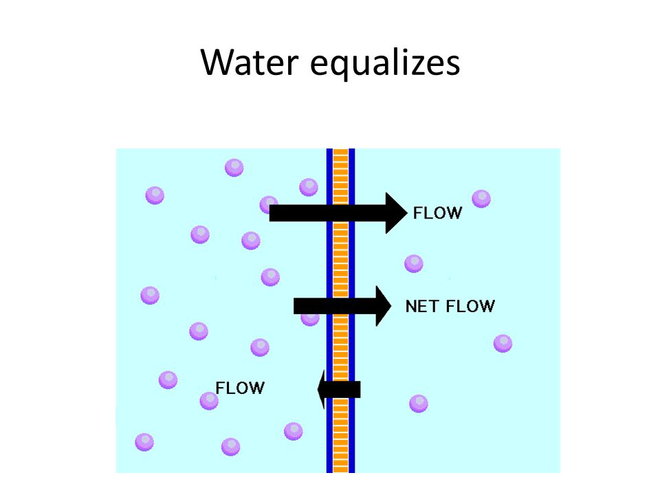 Water equalizes