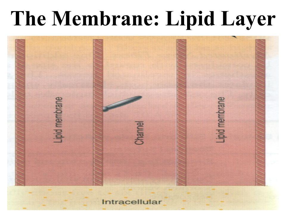 The Membrane: Lipid Layer