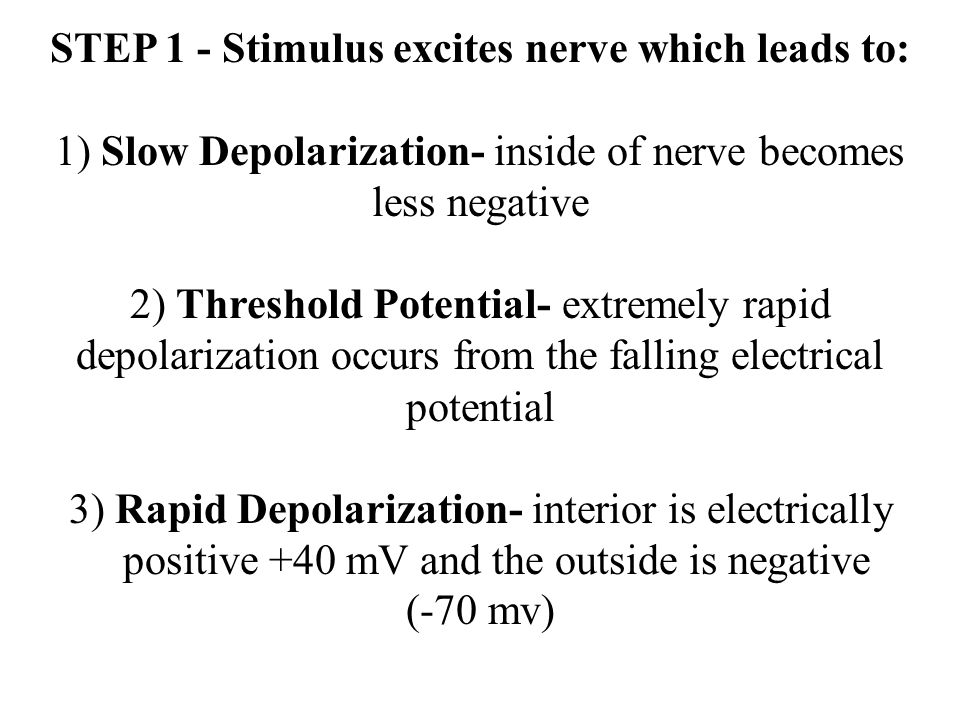 STEP 1 - Stimulus excites nerve which leads to: 1) Slow Depolarization- inside of nerve becomes less negative 2) Threshold Potential- extremely rapid