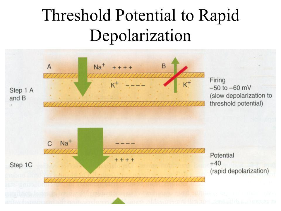 Threshold Potential to Rapid Depolarization
