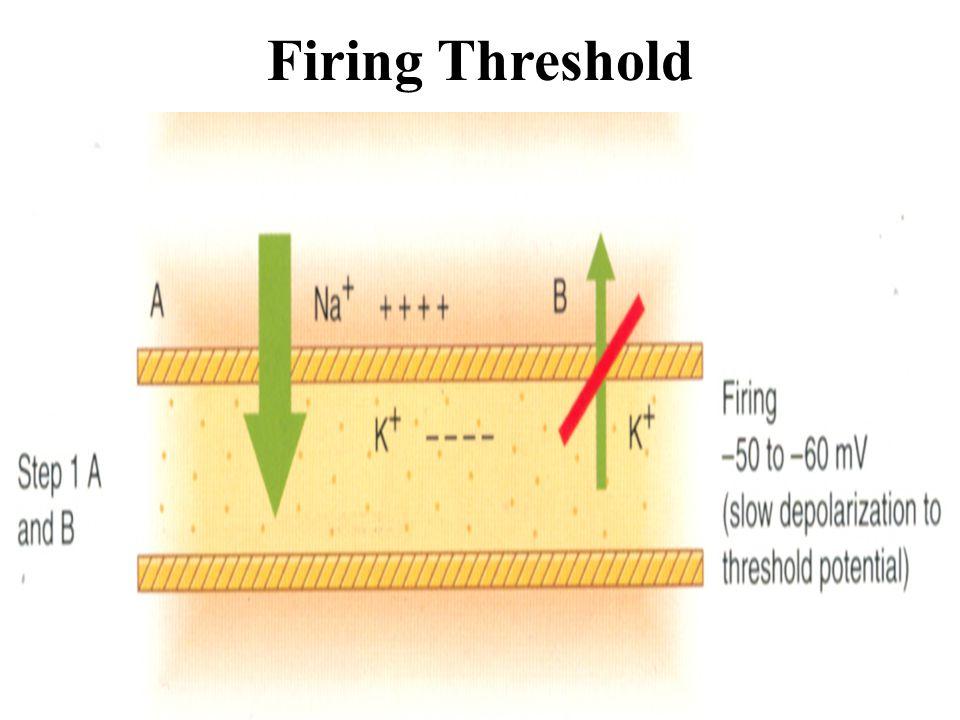 Firing Threshold