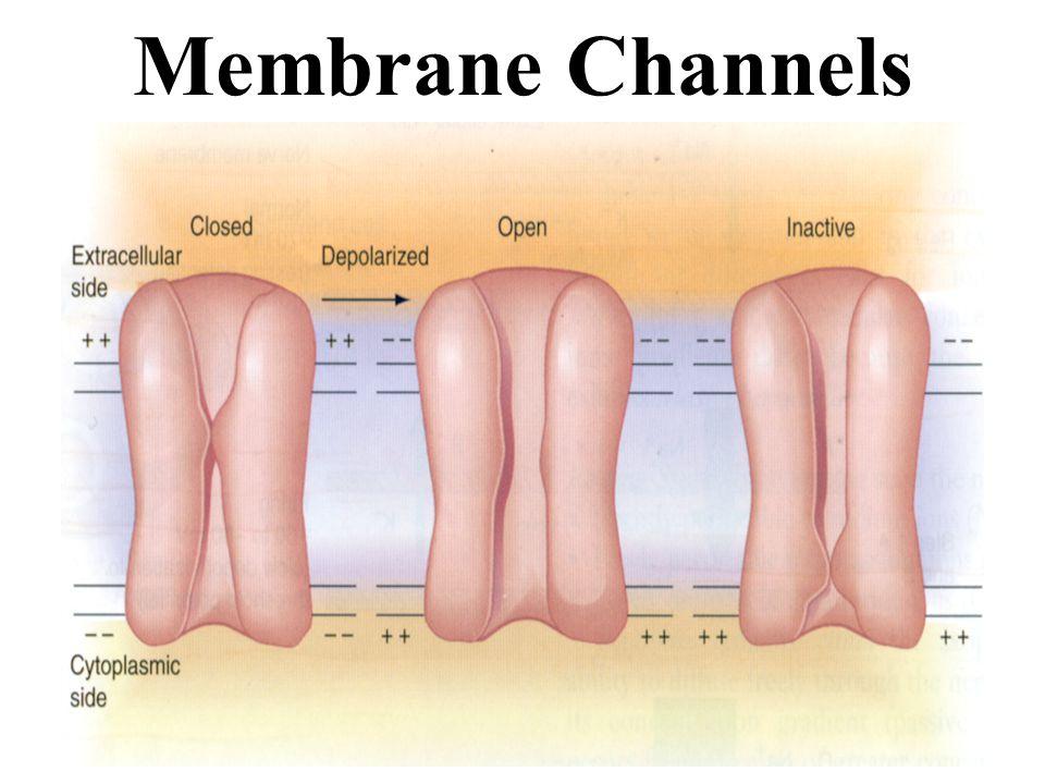 Membrane Channels