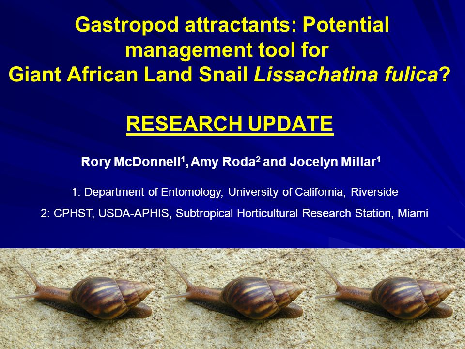 Gastropod attractants: Potential management tool for Giant African Land Snail Lissachatina fulica? RESEARCH UPDATE Rory McDonnell 1, Amy Roda 2 and Jo