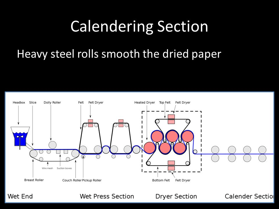 Calendering Section Heavy steel rolls smooth the dried paper
