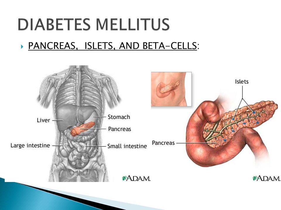 PANCREAS, ISLETS, AND BETA-CELLS: