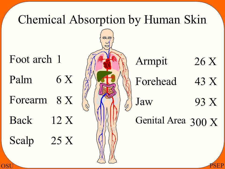 OSU PSEP Chemical Absorption by Human Skin Foot arch Palm Forearm Back Scalp Armpit Forehead Jaw Genital Area 1 93 X 43 X 26 X 25 X 12 X 8 X 6 X 300 X