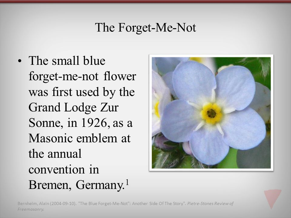 The Forget-Me-Not The small blue forget-me-not flower was first used by the Grand Lodge Zur Sonne, in 1926, as a Masonic emblem at the annual convention in Bremen, Germany.