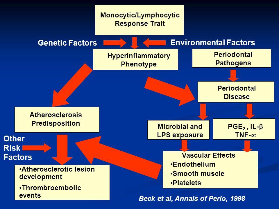 Monocytic/Lymphocytic Response Trait Genetic Factors Environmental Factors Hyperinflammatory Phenotype Periodontal Pathogens Atherosclerosis Predispos