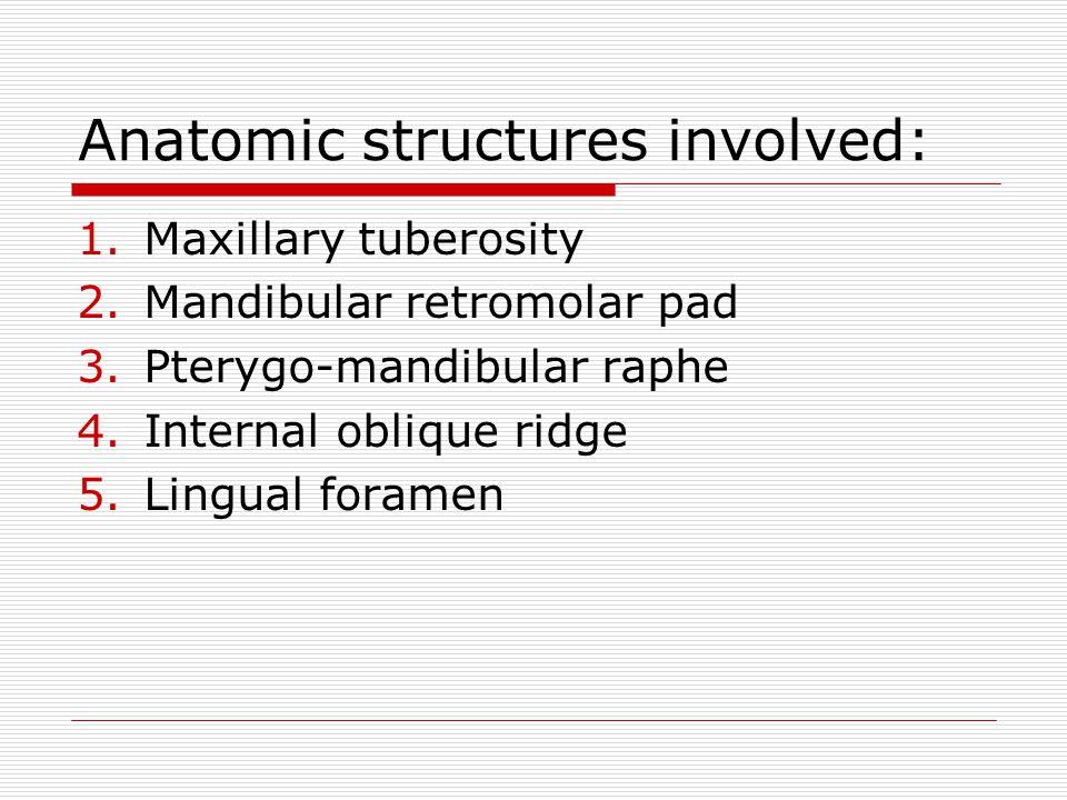 Anatomic structures involved: 1.Maxillary tuberosity 2.Mandibular retromolar pad 3.Pterygo-mandibular raphe 4.Internal oblique ridge 5.Lingual foramen