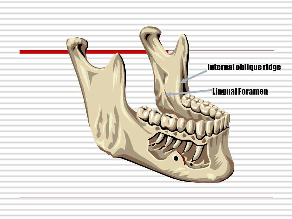 Lingual Foramen Internal oblique ridge