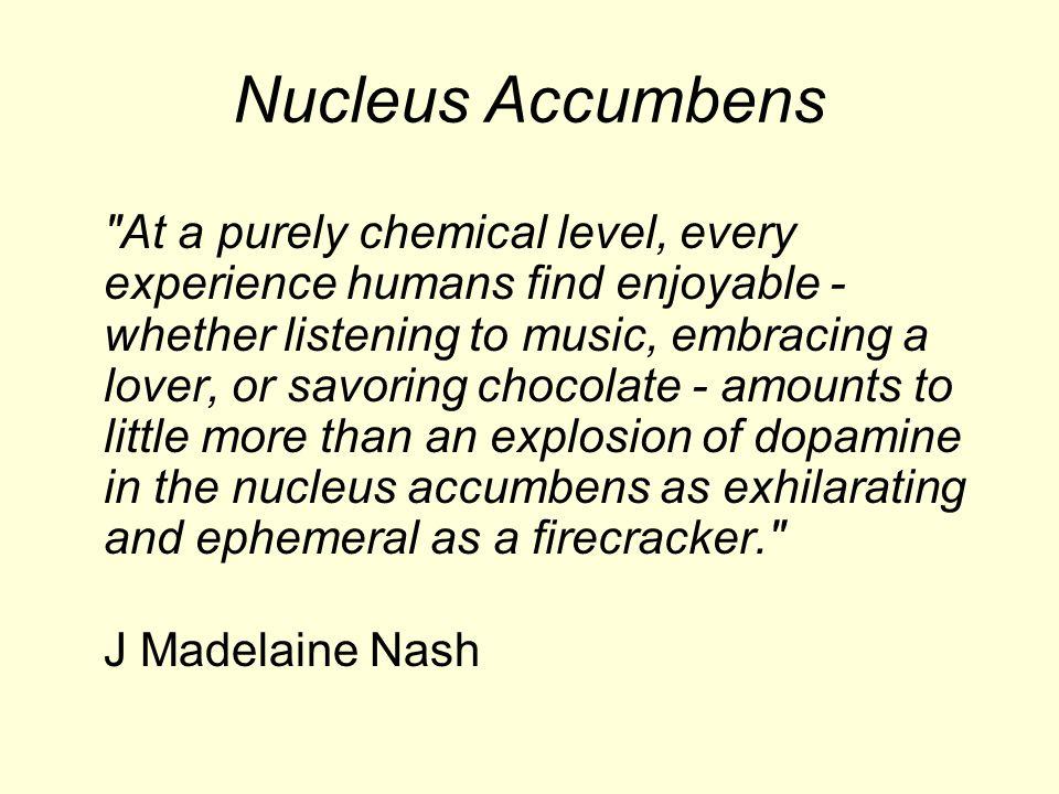 Nucleus Accumbens