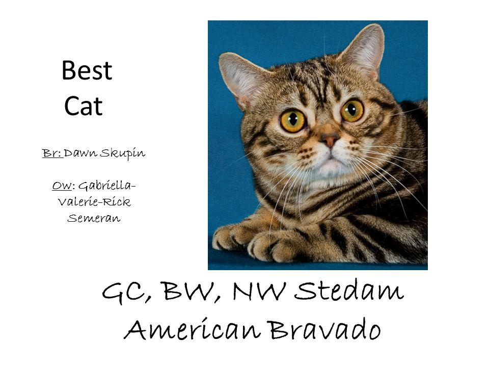 GC, BW, NW Stedam American Bravado Br: Dawn Skupin Ow: Gabriella- Valerie-Rick Semeran Best Cat