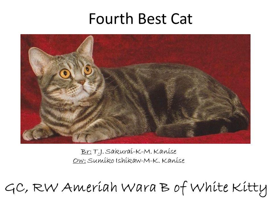 GC, RW Ameriah Wara B of White Kitty Br: T.J. Sakurai-K-M. Kanise Ow: Sumiko Ishikaw-M-K. Kanise Fourth Best Cat