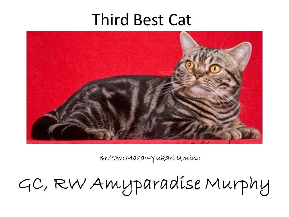 GC, RW Amyparadise Murphy Br/Ow: Masao-Yukari Umino Third Best Cat