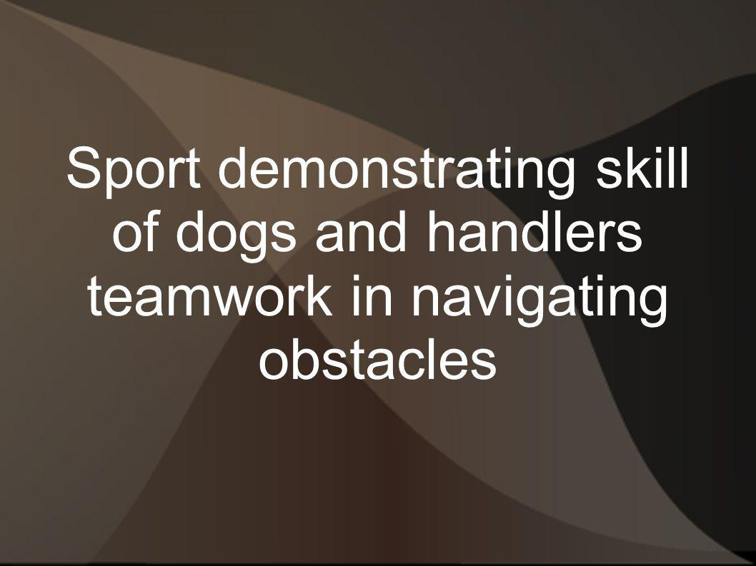 Sport demonstrating skill of dogs and handlers teamwork in navigating obstacles