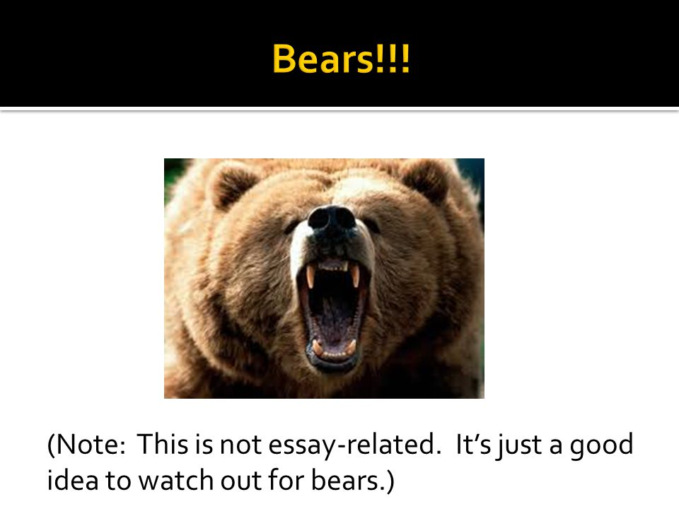 (Note: This is not essay-related. Its just a good idea to watch out for bears.)