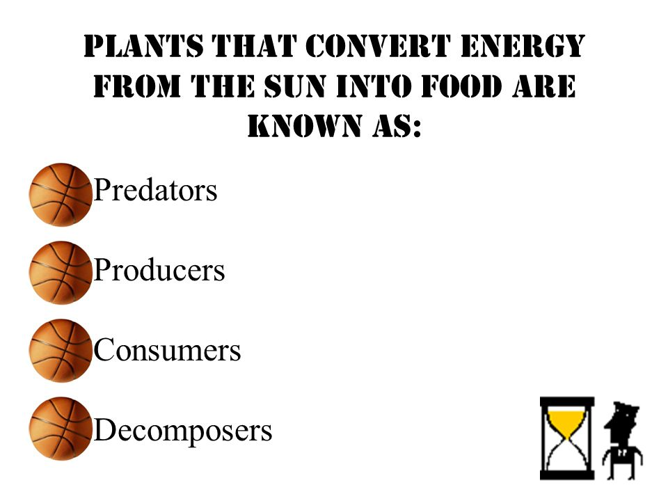 Plants that convert energy from the sun into food are known as: Predators Producers Consumers Decomposers