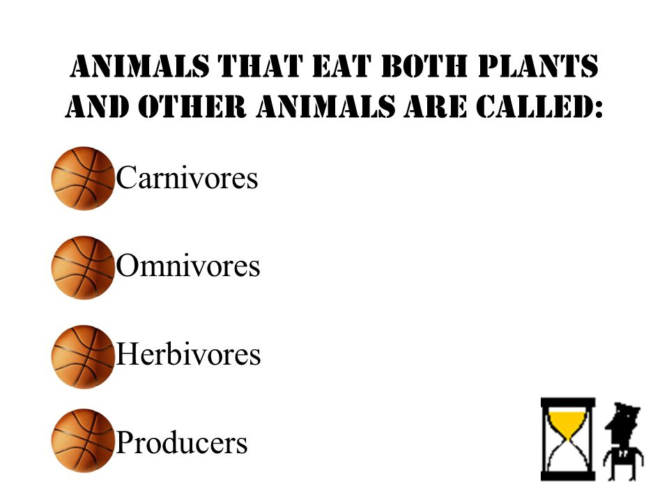 Animals that eat both plants and other animals are called: Carnivores Omnivores Herbivores Producers