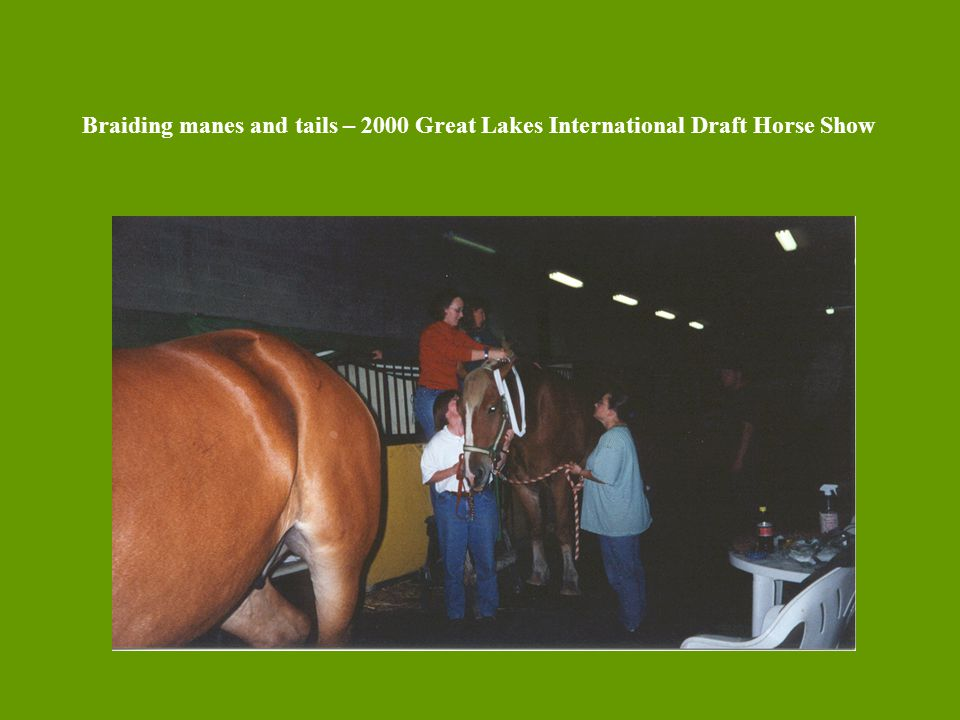 Braiding manes and tails – 2000 Great Lakes International Draft Horse Show