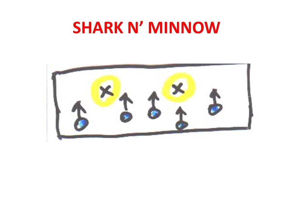 SHARK N MINNOW