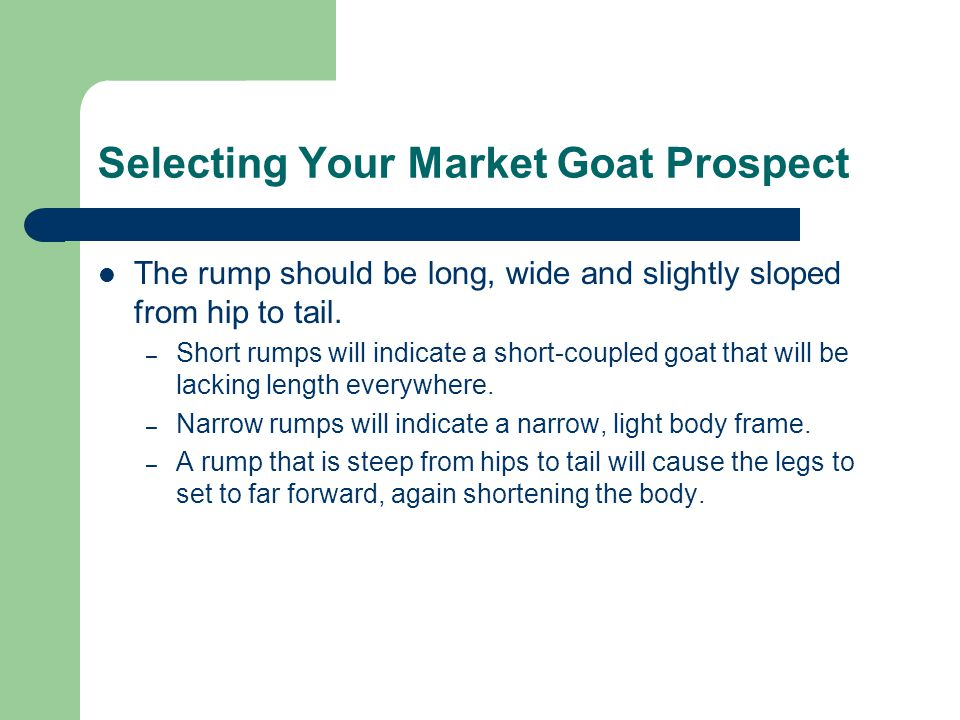 Selecting Your Market Goat Prospect The rump should be long, wide and slightly sloped from hip to tail.