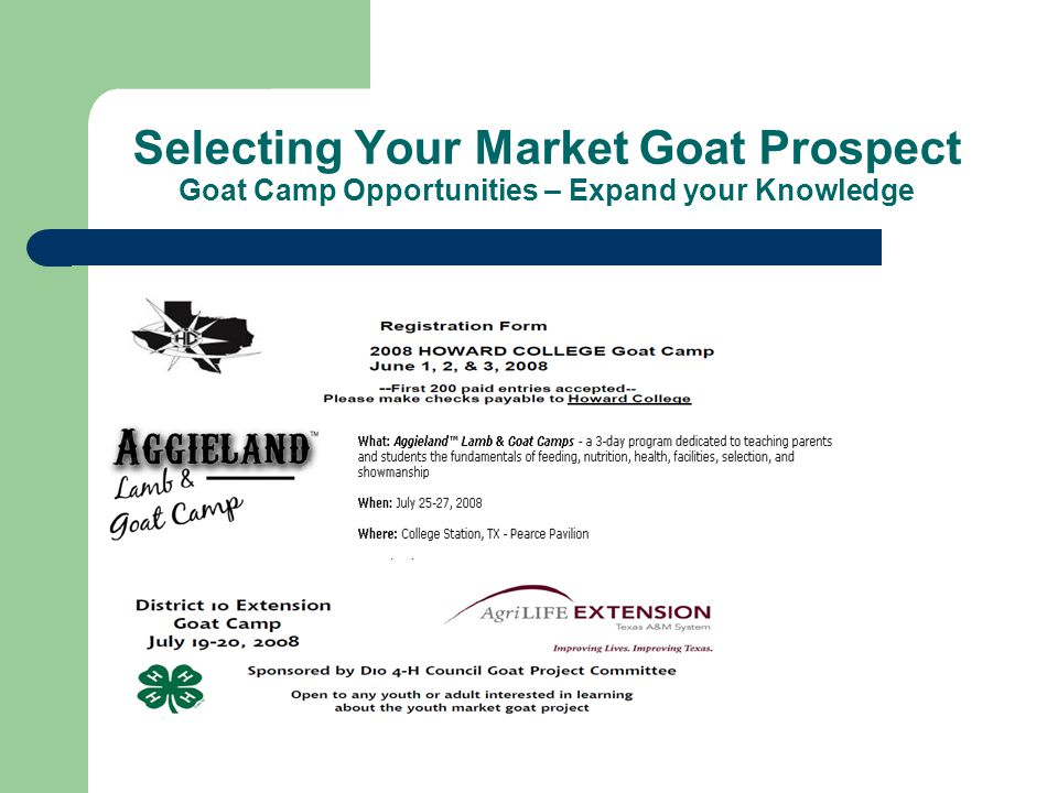 Selecting Your Market Goat Prospect Goat Camp Opportunities – Expand your Knowledge