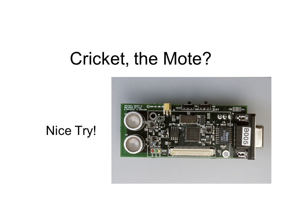 Cricket, the Mote Nice Try!