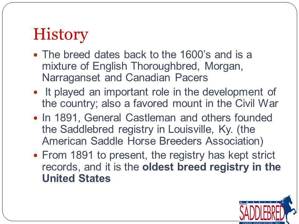 Current American Saddlebred Statistics
