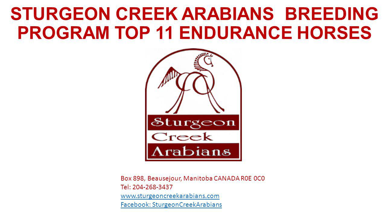 STURGEON CREEK ARABIANS BREEDING PROGRAM TOP 11 ENDURANCE HORSES Box 898, Beausejour, Manitoba CANADA R0E 0C0 Tel: Facebook: SturgeonCreekArabians