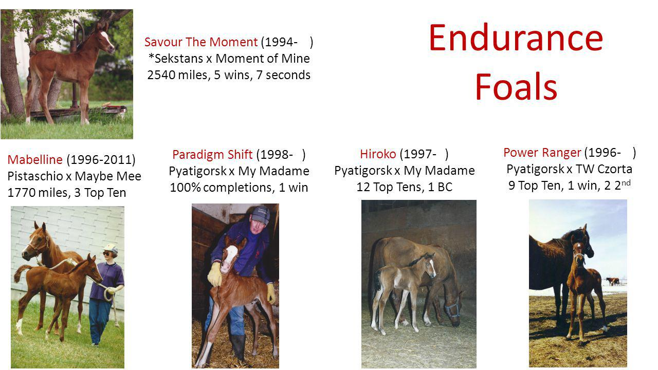Endurance Foals Mabelline (1996-2011) Pistaschio x Maybe Mee 1770 miles, 3 Top Ten Paradigm Shift (1998- ) Pyatigorsk x My Madame 100% completions, 1 win Power Ranger (1996- ) Pyatigorsk x TW Czorta 9 Top Ten, 1 win, 2 2 nd Hiroko (1997- ) Pyatigorsk x My Madame 12 Top Tens, 1 BC Savour The Moment (1994- ) *Sekstans x Moment of Mine 2540 miles, 5 wins, 7 seconds
