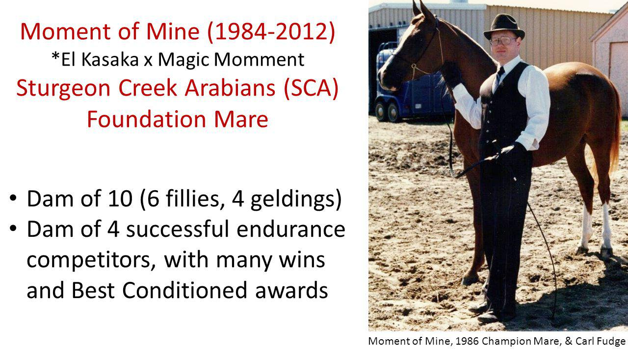 Moment of Mine ( ) *El Kasaka x Magic Momment Sturgeon Creek Arabians (SCA) Foundation Mare Dam of 10 (6 fillies, 4 geldings) Dam of 4 successful endurance competitors, with many wins and Best Conditioned awards Moment of Mine, 1986 Champion Mare, & Carl Fudge