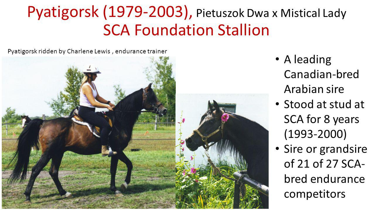 Pyatigorsk (1979-2003), Pietuszok Dwa x Mistical Lady SCA Foundation Stallion A leading Canadian-bred Arabian sire Stood at stud at SCA for 8 years (1993-2000) Sire or grandsire of 21 of 27 SCA- bred endurance competitors Pyatigorsk ridden by Charlene Lewis, endurance trainer