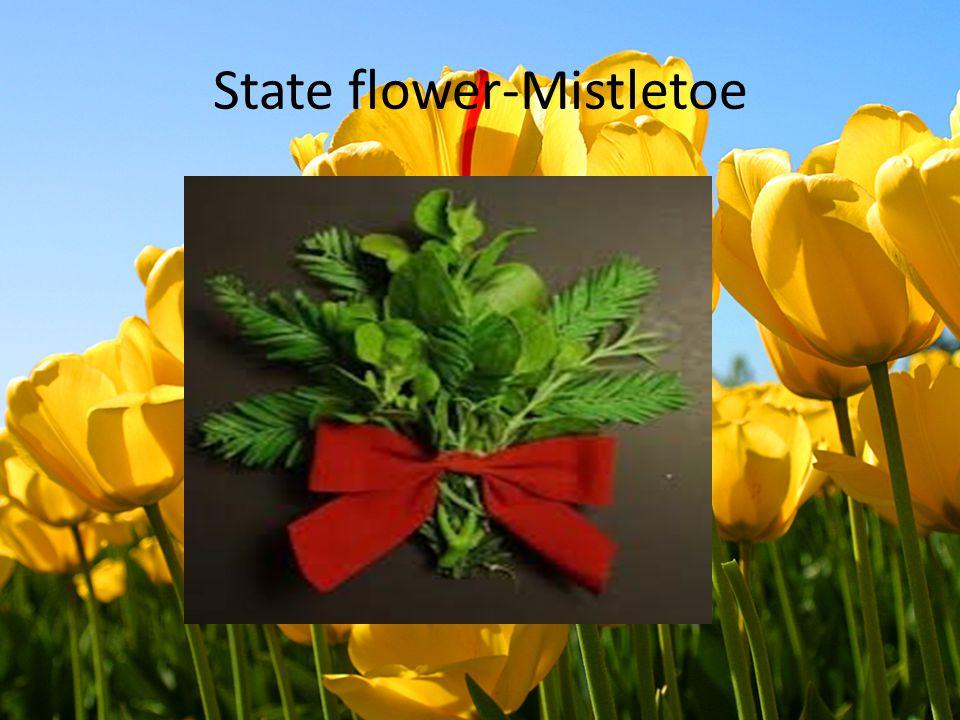 State flower-Mistletoe