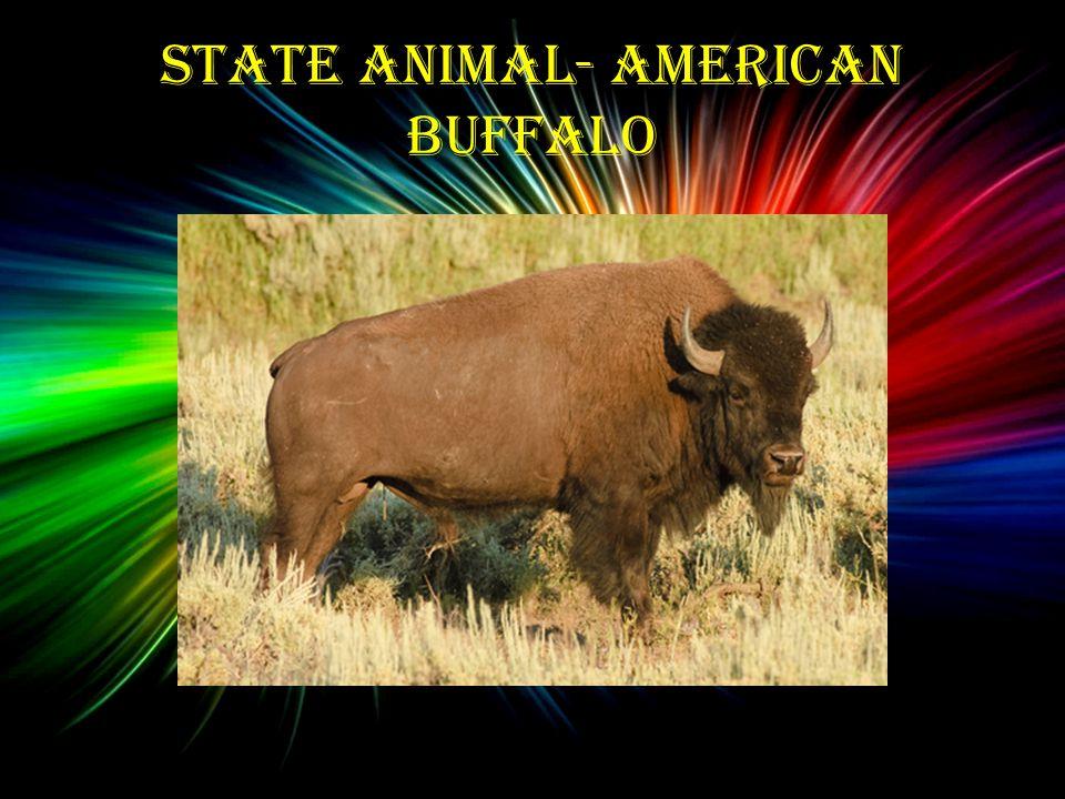 State Animal- American Buffalo