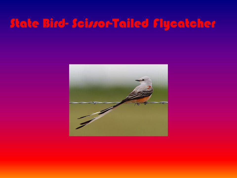 State Bird- Scissor-Tailed Flycatcher