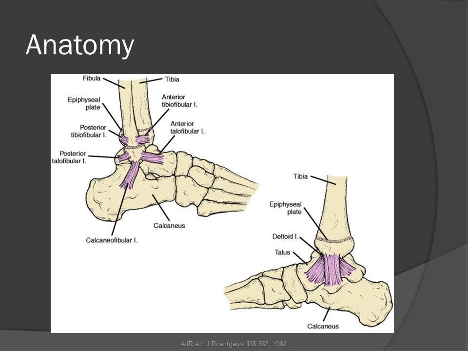 Anatomy AJR Am J Roentgenol 138:683, 1982