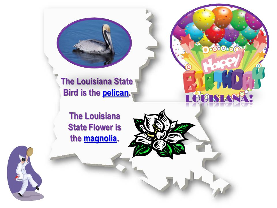 The Louisiana State Flower is the magnolia. magnolia The Louisiana State Bird is the pelican.