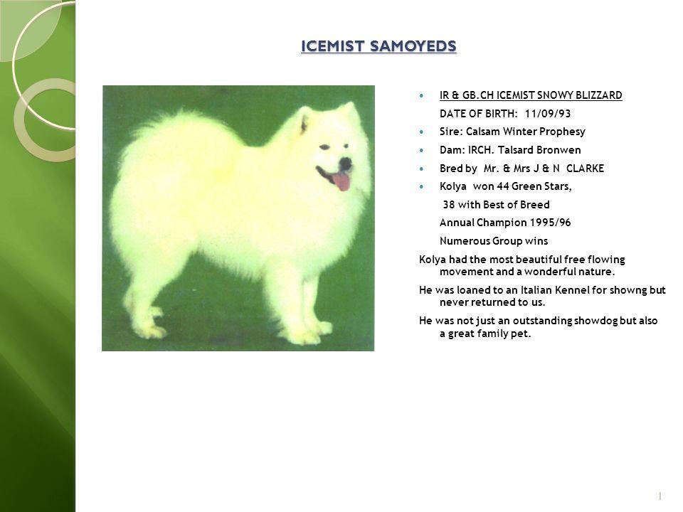 ICEMIST SAMOYEDS IR & GB.CH ICEMIST SNOWY BLIZZARD DATE OF BIRTH: 11/09/93 Sire: Calsam Winter Prophesy Dam: IRCH.