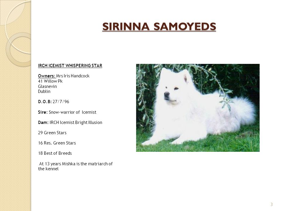 SIRINNA SAMOYEDS 3 IRCH ICEMIST WHISPERING STAR Owners: Mrs Iris Handcock 41 Willow Pk Glasnevin Dublin D.O.B: 27/7/96 Sire: Snow-warrior of Icemist D