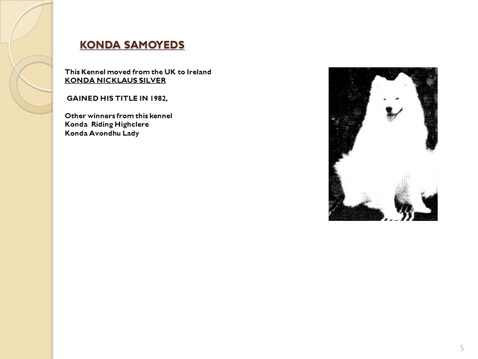 KONDA SAMOYEDS 5 This Kennel moved from the UK to Ireland KONDA NICKLAUS SILVER GAINED HIS TITLE IN 1982, Other winners from this kennel Konda Riding