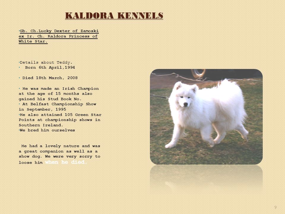 KALDORA KENNELS Gb. Ch.Lucky Dexter of Zamoski ex Ir. Ch. Kaldora Princess of White Star. Details about Teddy. Born 6th April,1994 Died 18th March, 20