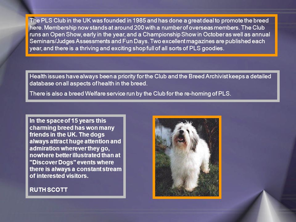 The PLS Club in the UK was founded in 1985 and has done a great deal to promote the breed here.