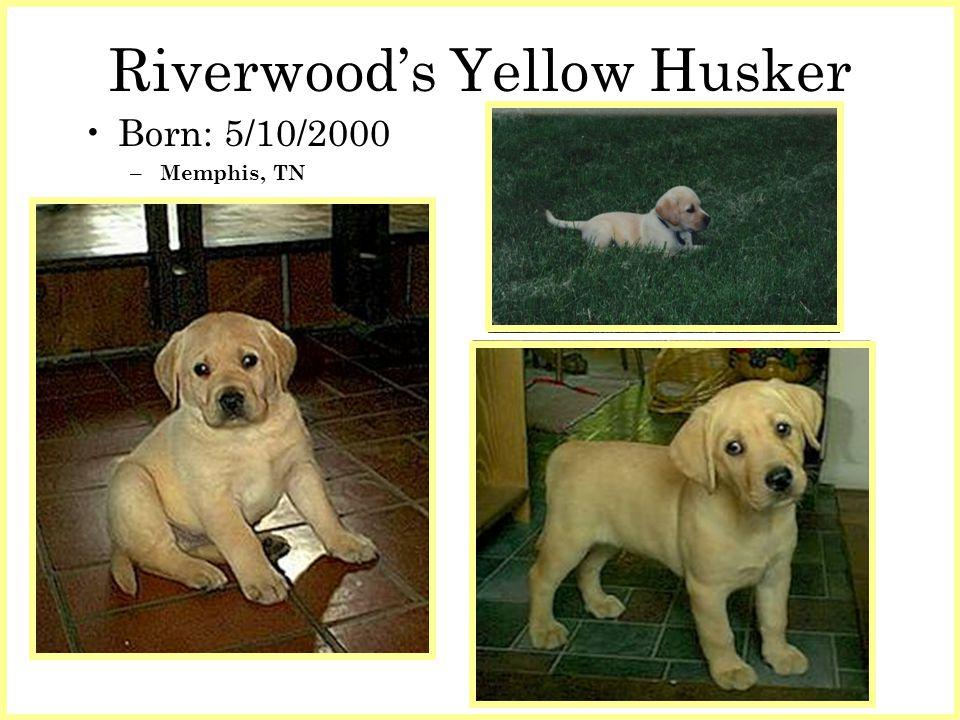 Riverwoods Yellow Husker Born: 5/10/2000 – Memphis, TN